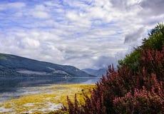 海湾Fyne在苏格兰 免版税库存照片
