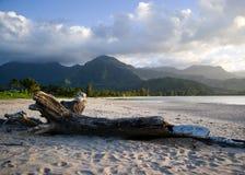 海湾hanalei考艾岛 免版税库存照片