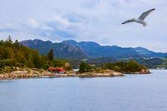 海湾Lysefjord -挪威 免版税库存照片