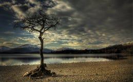 海湾milarrochy的Loch Lomond 免版税图库摄影