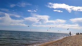 海滨的人们,鸥飞行在海滩,鸥飞行在一个慢动作的海滩 股票录像