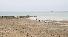 海滩、岩石区和海运。 库存图片