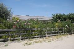 海滩俱乐部的夹竹桃植物 免版税库存照片
