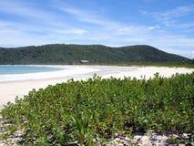 海滩加勒比佛拉明柯舞曲波多里哥 图库摄影