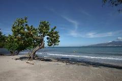 海滩加勒比天堂 库存图片