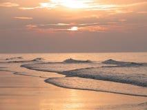 海滩加州桂 免版税库存图片