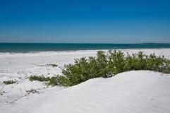 海滩动物区系 库存照片