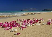 海滩华美的夏威夷兰花 免版税库存图片