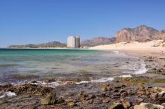 海滩卡洛斯・墨西哥圣地面蛇 免版税库存图片
