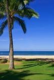 海滩可爱的场面 库存图片