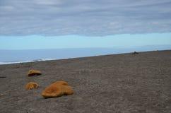 海滩和Skyscapes在俄勒冈海岸 免版税图库摄影