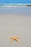 海滩唯一海星 免版税库存照片