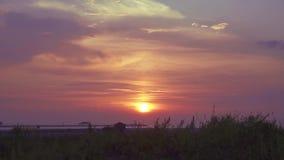 海滩在与飞行在天空的海鸥的黎明 股票录像