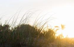 海滩在日落的沙丘 库存照片