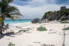 海滩墨西哥半岛tulum乌龟尤加坦 免版税库存图片
