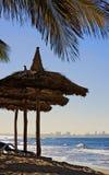 海滩墨西哥掌上型计算机盖的结构树&# 免版税库存照片