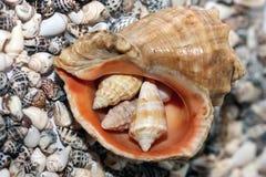 海滩壳 免版税库存照片