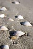 海滩壳 图库摄影