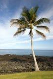 海滩夏威夷人掌上型计算机 免版税图库摄影