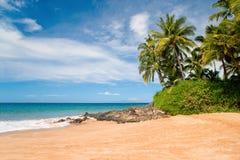 海滩夏威夷热带的棕榈树 库存照片