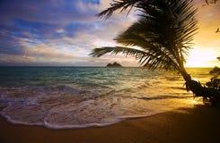 海滩夏威夷lanikai日出 库存图片