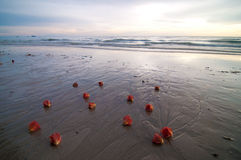 海滩夜间花红色 库存照片