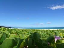 海滩大夏威夷海岛pohuehue 免版税库存图片