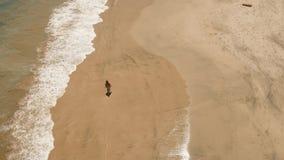 海滩女孩走 巴厘岛印度尼西亚 股票视频