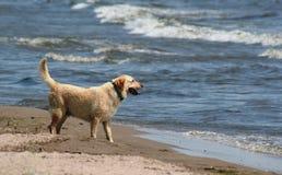 海滩实验室 库存照片
