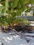 海滩密林 免版税库存图片