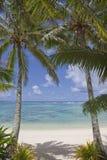 海滩对热带的棕榈树 免版税库存图片
