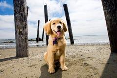 海滩小狗 库存照片