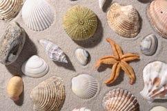 海滩巧克力精炼机贝壳 免版税库存照片