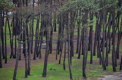 海滩干燥结构树 免版税库存照片