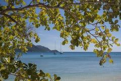海滩扁桃, Fitzroy海岛 免版税库存照片