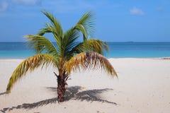 海滩掌上型计算机含沙结构树 圣乔治` s,格林纳达 库存照片