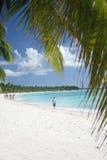 海滩掌上型计算机天堂铺沙空白的结构树 图库摄影