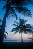 海滩掌上型计算机日落结构树 免版税图库摄影
