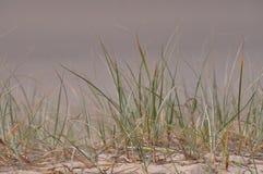 海滩接近的草沙子虚拟  免版税图库摄影