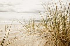 海滩接近的草高  免版税库存图片
