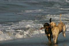 海滩最佳狗朋友使用 免版税库存照片