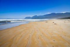 海滩朊病毒 库存图片