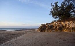 海滩木麻黄属的各种常绿乔木峭壁达&# 库存照片