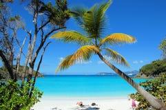 海滩树干 免版税库存照片