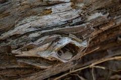 海滩树桩特写镜头 免版税图库摄影