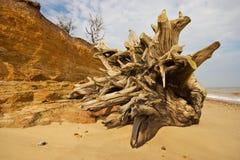 海滩树桩 免版税库存图片