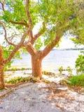海滩树爱2 免版税库存照片