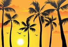 海滩棕榈树 向量例证