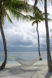 海滩棕榈树 免版税库存图片