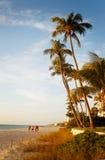 海滩棕榈树 库存照片